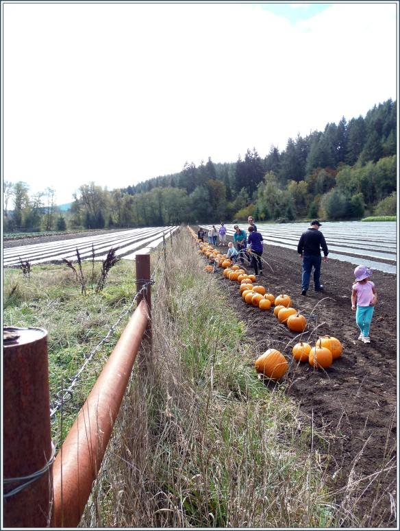 Winter Green Farm - Pumpkin