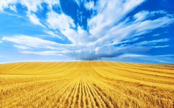 wheat-field-harvest-wallpaper-4-1024x640.jpg